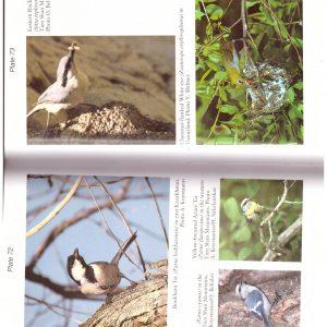 BIRDS OF RUSSIA