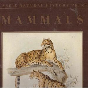 Classic Natural History Prints - Mammals