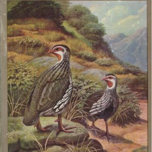 Gamebirds of Southern Africa